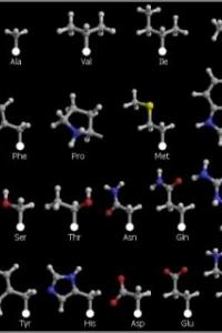 Введение в физику белка