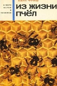 Из жизни пчел