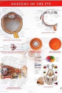 Netter Anatomy Charts: Anatomy of the Eye Chart