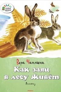 Как заяц в лесу живёт
