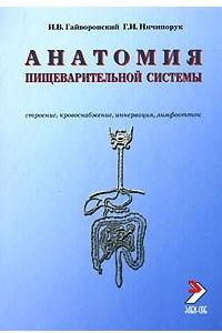 Анатомия пищеварительной системы. Строение, кровоснабжение, иннервация, лимфоотток