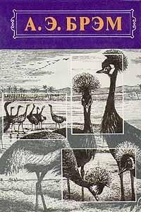 А. Э. Брэм. Жизнь животных. В трех томах. Том 2. Птицы
