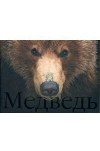 Медведь / Bear