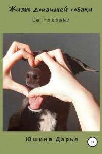 Жизнь домашней собаки. Её глазами